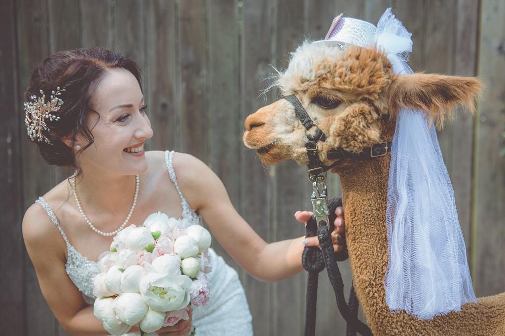 Braut-mit-Alpaka-Hochzeitsplanerin-Oldenburg-Gluecksverbreiter